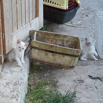 katzen husten keuchen