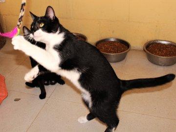 Können Katzen Coronavirus Bekommen