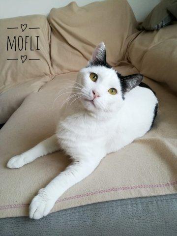 Mofli