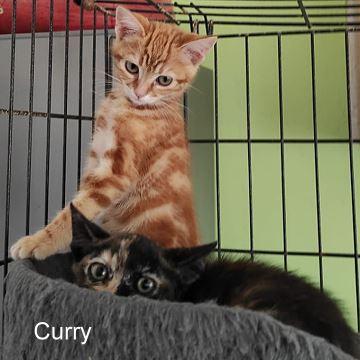 Paprika-Curry